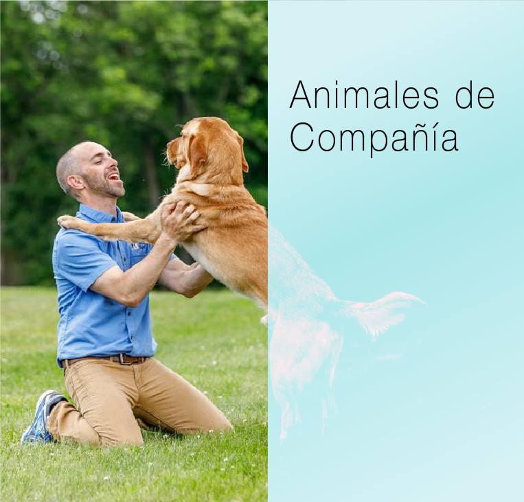 Haga clic aquí para visitar la página  animals de compania