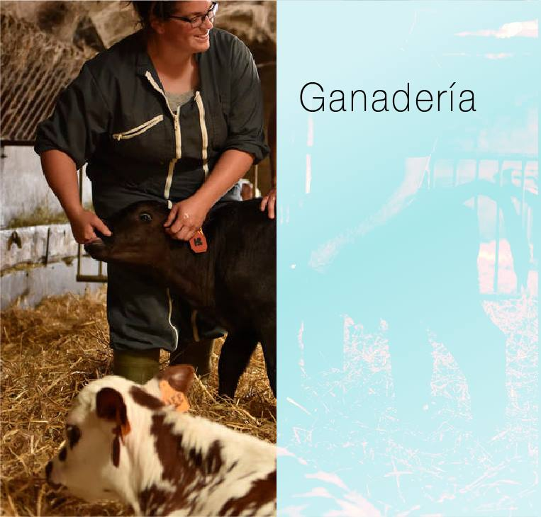 Haga clic aquí para visitar la página ganadería